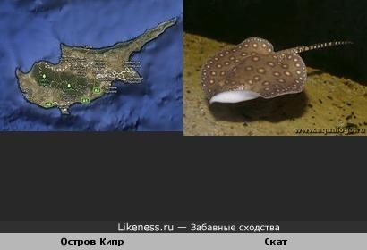 Остров Кипр похож на ската