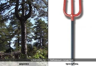 Трёхзубое дерево или деревянная вилка