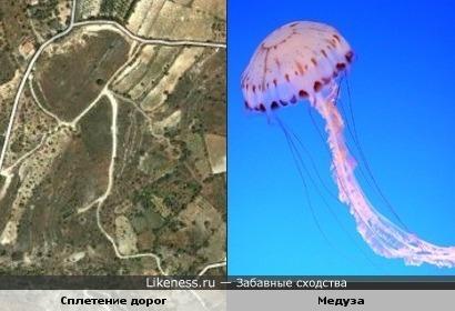 Сплетение дорог в форме медузы