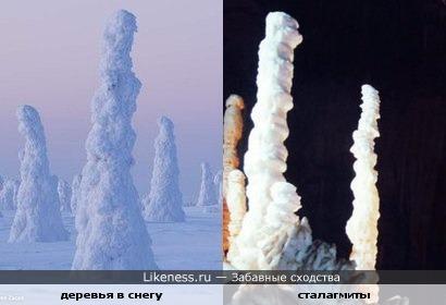 Окутанные снегом деревья становятся похожи на сталагмиты
