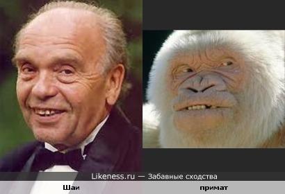 Шаинский и примат