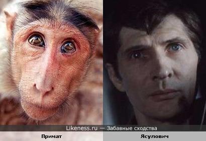 Примат и Игорь Ясулович