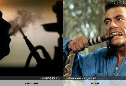 Жан-Клод Ван Дамм (Jean-Claude Van Damme) курит змею