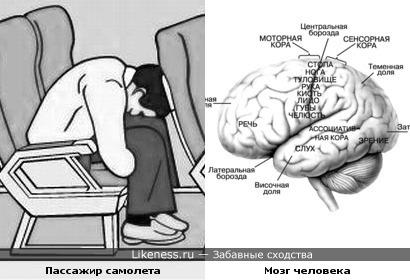 Сгруппировавшийся авиапассажир и головной мозг человека