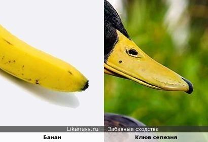 Банан и клюв селезня