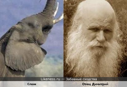 Слон и отец Димитрий