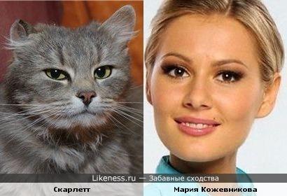 Кошка Скарлетт и актриса Мария Кожевникова