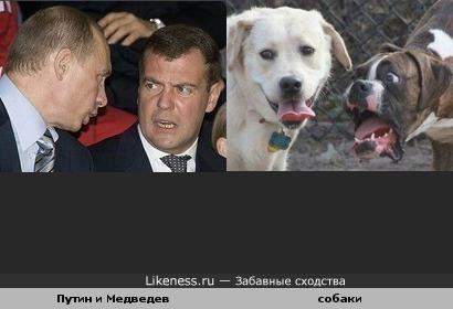 Владимир Путин и Дмитрий Медведев и две собаки
