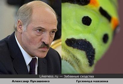 Президент Белоруссии Алексанр Лукашенко и гусеница махаона