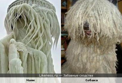 Обледеневший после шторма маяк и собака породы комондор