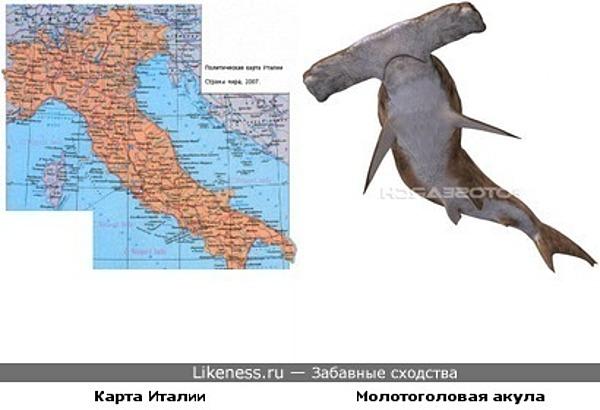 Карта Италии и молотоголовая акула