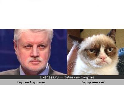 Сергей Миронов и сердитый кот