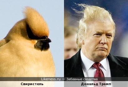 В Штатах президент теперь... нет, не ястреб, свиристель!