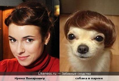 Ирена Понарошку и собака в парике