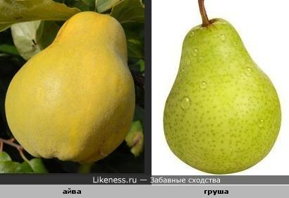 Айва похожа на грушу