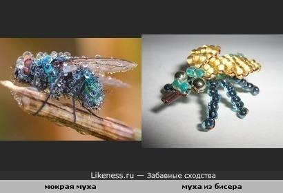 Мокрая муха похожа на муху из бисера