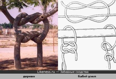 Дерево завязалось в морской узел