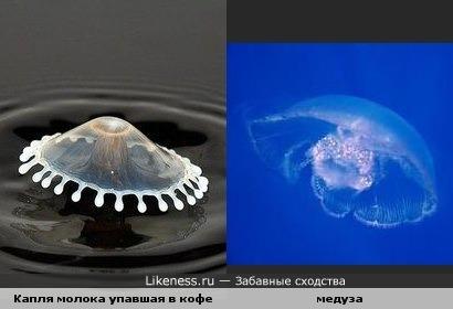 Капля молока упавшая в кофе похожа на медузу