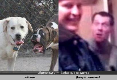 """Две собаки похожи на милиционера и """"дверь запили!"""""""