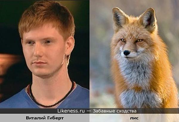 Виталий Гиберт похож на лиса