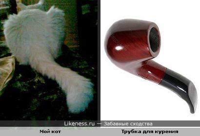 Кот похож на трубку для курения