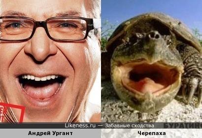 Андрей Ургант похож на черепаху