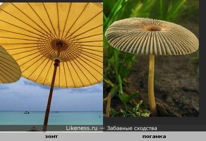 Зонт и поганка