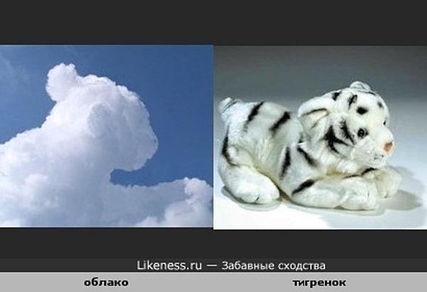 Облако похоже на тигренка