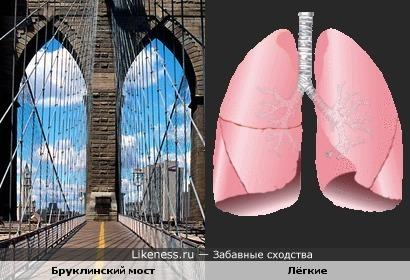 Бруклинский мост похож на лёгкие