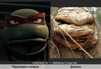 Черепашка Ниндзя и Дерево