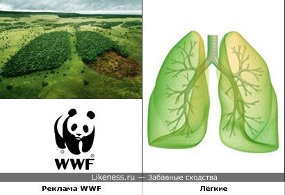 Реклама WWF и лёгкие