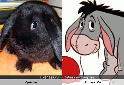 Кролик VS Ослик Иа (из диснеевского мультфильма про Винни-Пуха)