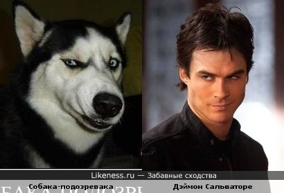 Собака-подозревака и Дэймон