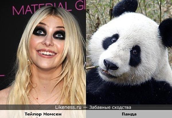 Тейлор Момсен похожа на панду