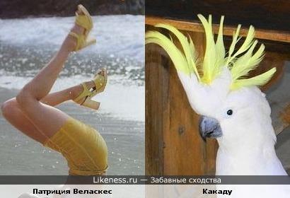 есть какое-то сходство