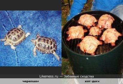 хот-доги похожи на черепах