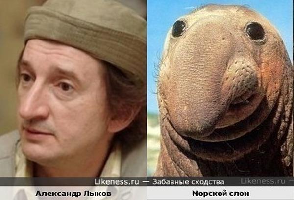 Александр Лыков похож на морского слона