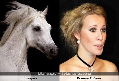 лошадь похожа на Ксению Собчак