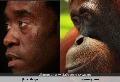 глаза Дона Чидла похожи на глаза орангутанга