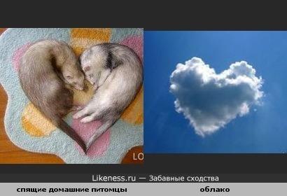 спящие домашние питомцы похожи на облако