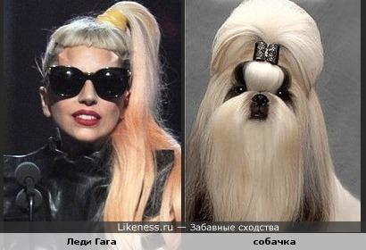 Леди Гага и собачка похожи