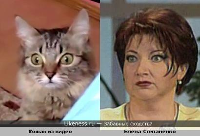 Кошак из видео похож на Елену Степаненко