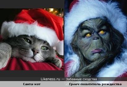 Кот похож на Гринча (Джим Керри)