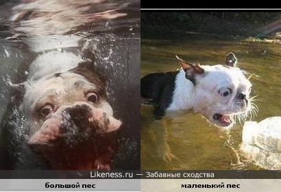 псы разные, а проблема общая))))) где-то чем-то зацепились