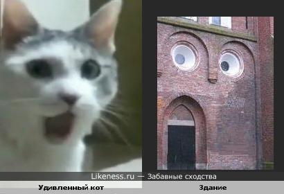 Удивленный кот похож на здание ))