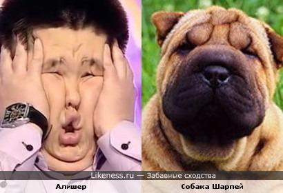 Алишер из команды КВН ''Казахи'' похож на Шарпея