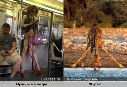 Мужчина в метро против жирафикоа