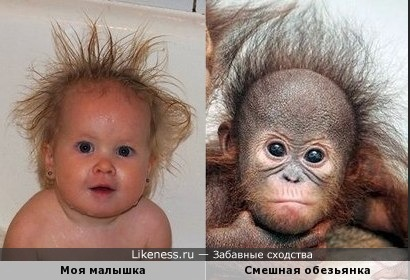 Детки и обезьянки