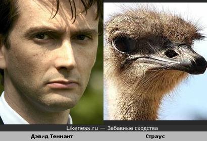 Дэвид Теннант вылитый страус