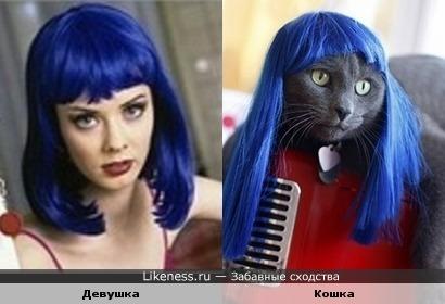 """Кошки так похожи на людей или """"Две Мальвины"""""""
